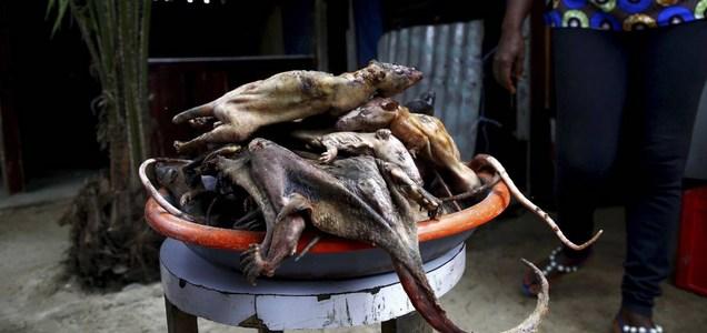 Detectan ratas infectadas de coronavirus en restaurantes de Vietnam listas para comer
