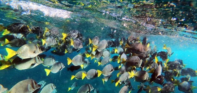 Crisis in the Galapagos: Chinese fishing fleets and COVID-19 threaten a natural wonder