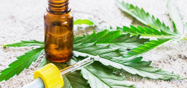 Researchers look into cannabis as a potential COVID-19 treatment