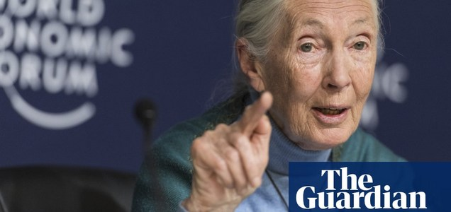 Jane Goodall:'Humanity is fisnished if it fails to adapt after Covid-19