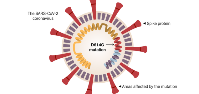 Mutation Allows Coronavirus to Infect More Cells, Study Finds. Scientists Urge Caution.