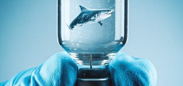 """Vaccino Covid, per produrlo minacciati 500.000 squali. """"Utilizzato olio presente nel fegato"""""""
