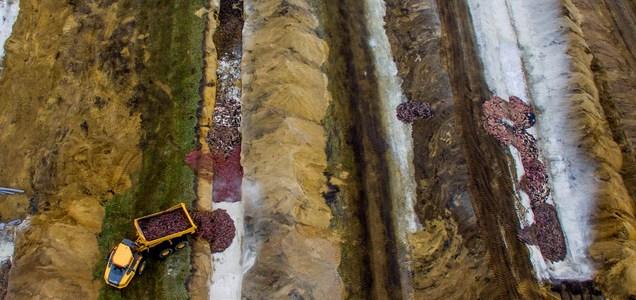 Dinamarca: los visones sacrificados para prevenir un brote de COVID-19 están emergiendo de la tierra