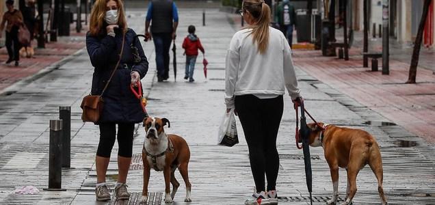 Así se debería desinfectar a los perros tras los paseos (por la Covid-19)