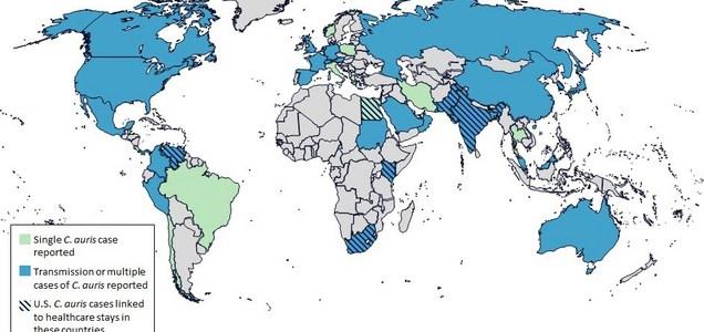 Allarme globale Candida auris: cosa c'è da sapere