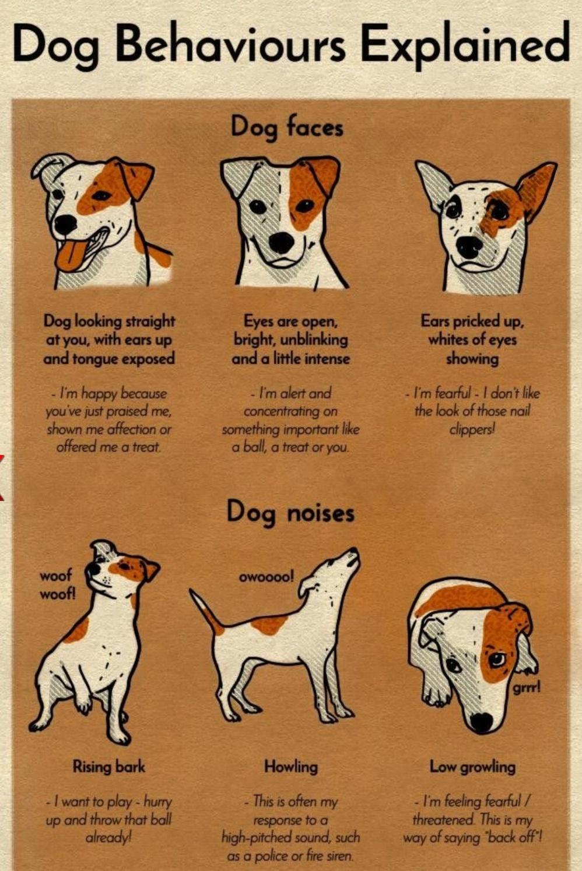 Chart explaining dog faces and noises