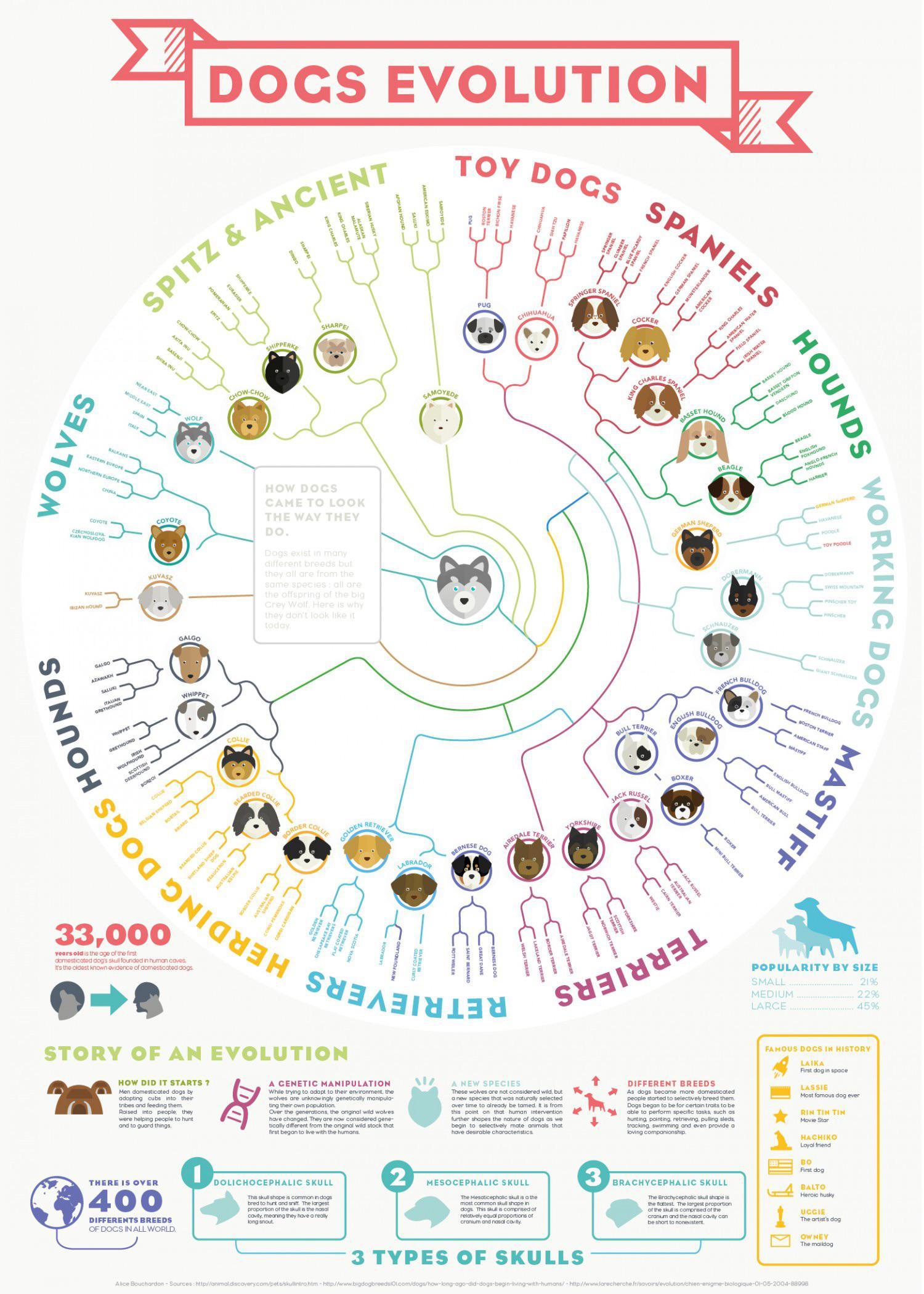 Wolf to dog evolution