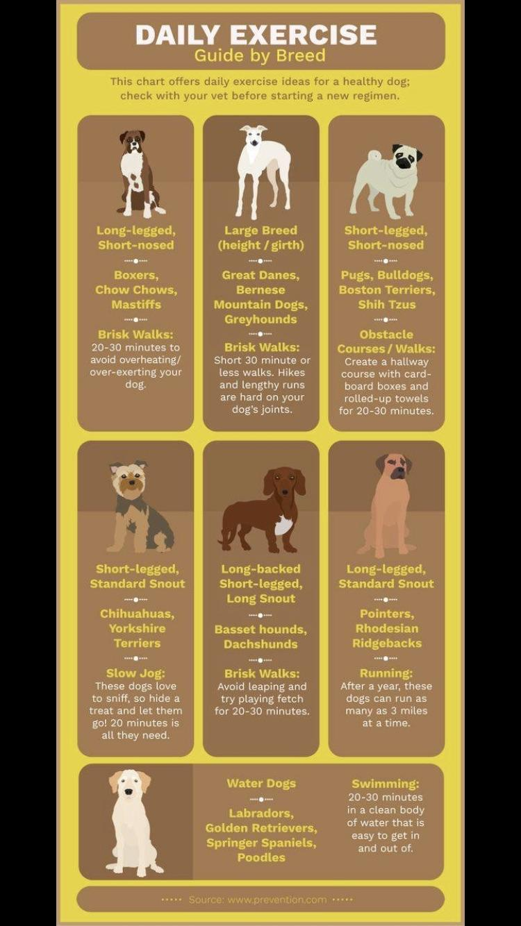 Exercise rules by breed
