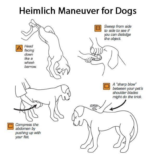 Heimlich Maneuver for dogs