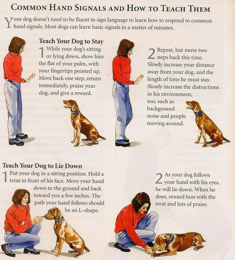 Chart teaching hand signals for Stay, Sit, and Down
