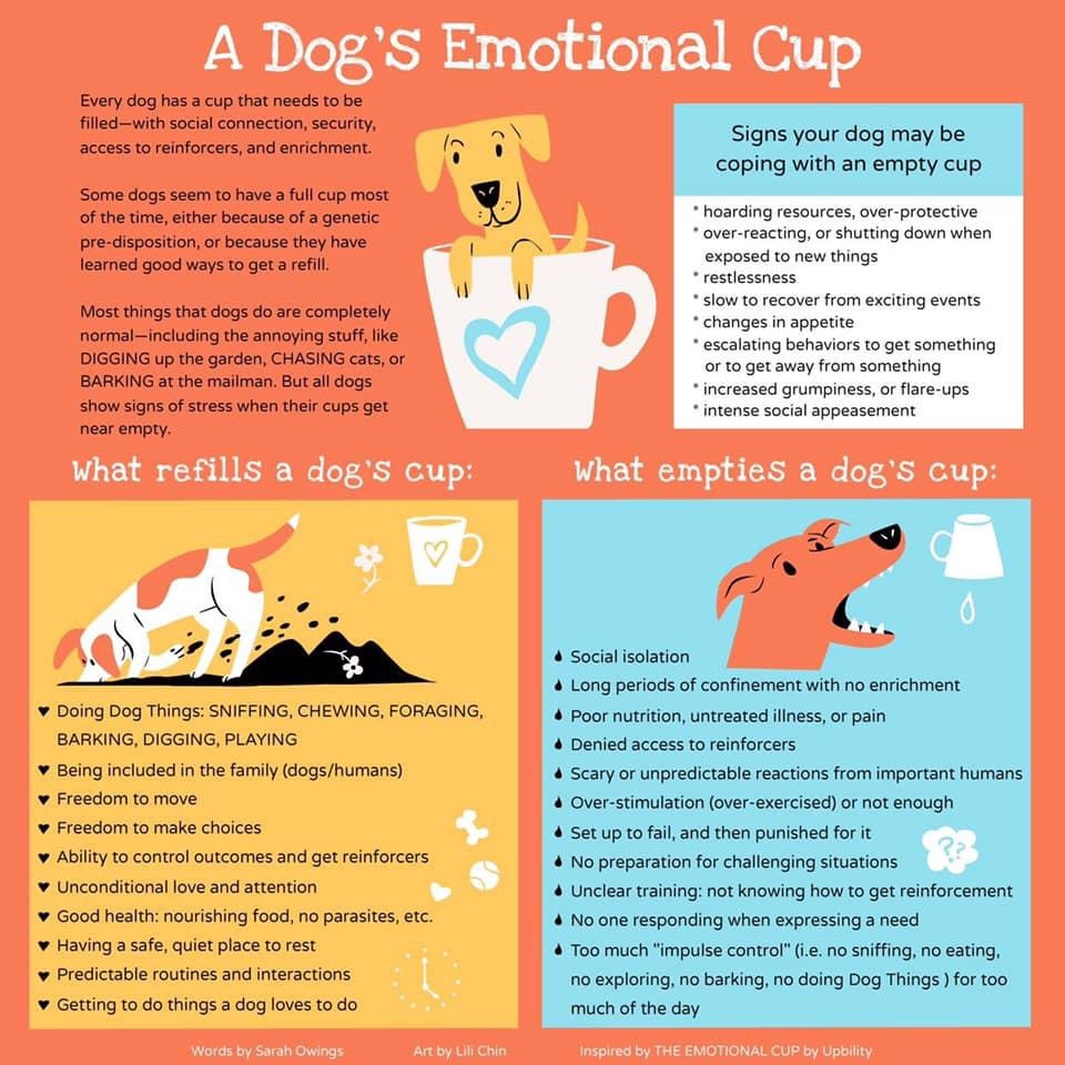Chart explaining how to keep your pup happy.