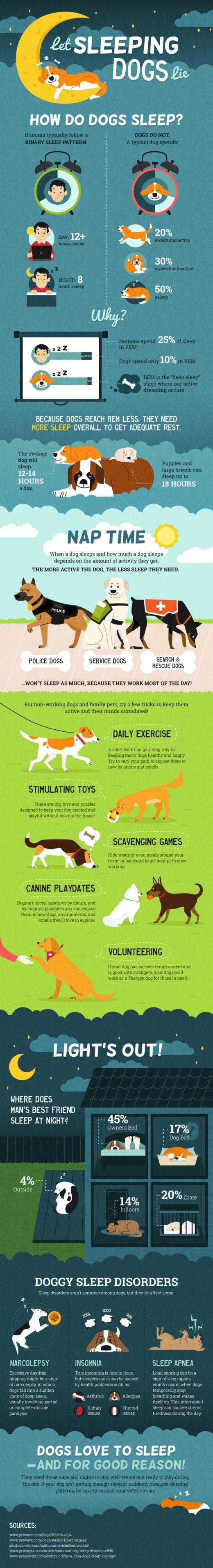 Dog sleep patterns