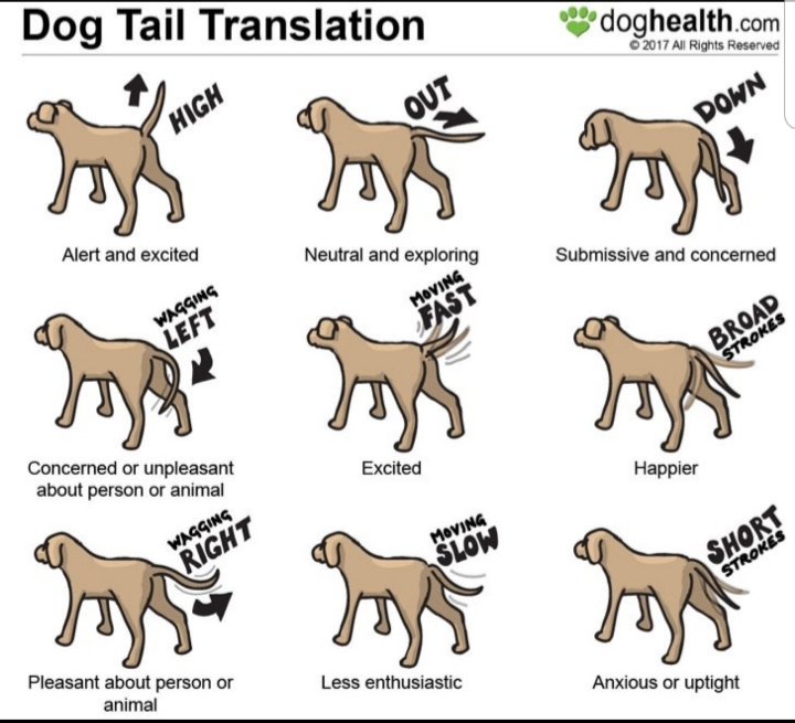 Chart on what a dog's tail is telling you