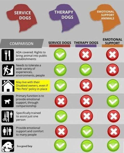 Different kinds of service dogs