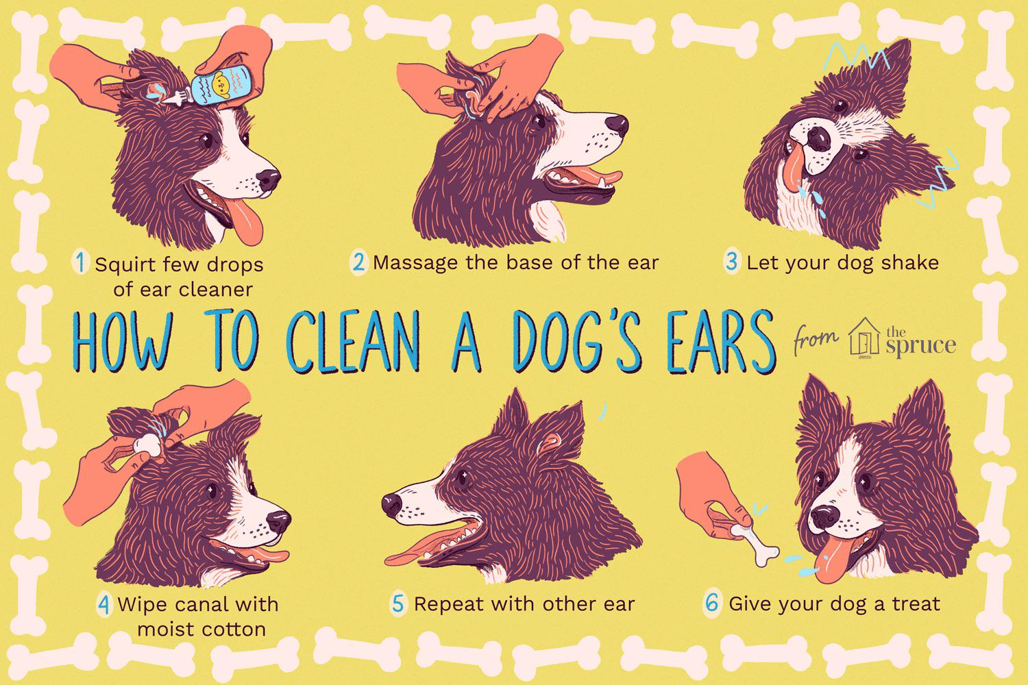 Chart on how to clean dog ears